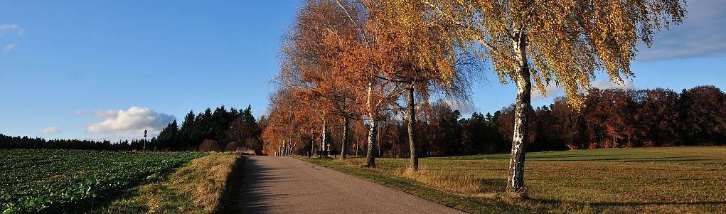 Fußweg zum Buchwald-Parkplatz